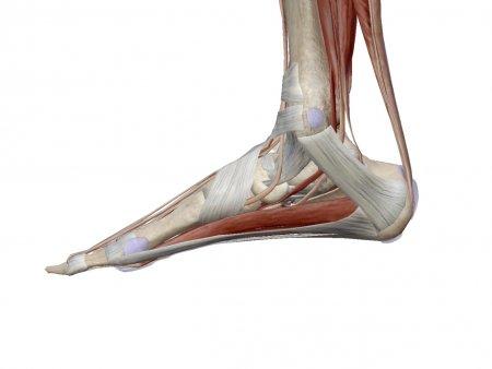 足裏の筋肉をパーソナルトレーニングで鍛えよう